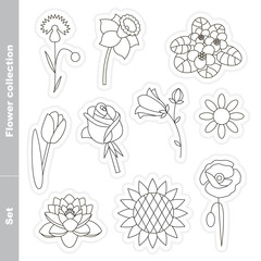 Flower set in vector.