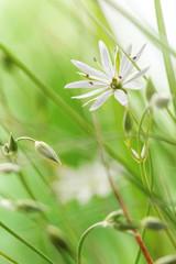 Delicate flower field
