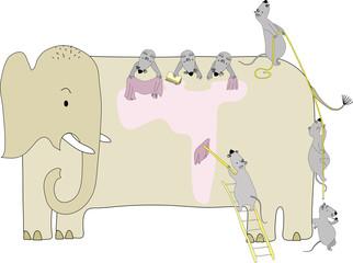Mouses wash elephant