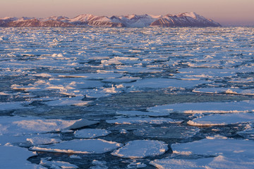 Sea Ice - Greenland