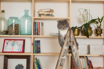 cat on a wooden painting ladder