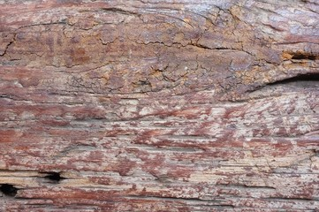 bark wood use as natural background
