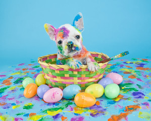 Fototapete - Painted Easter Puppy