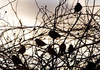 bird sparrows on a tree at sunrise sun