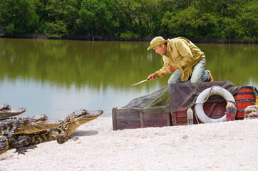 Funny ship wrecked castaway man stranded in the mangrove swamp being attacked by alligators as he climbs on top of his cargo boxes and points his knife at the alligators protecting his supplies.