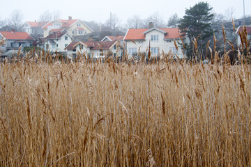 Field in front of swedish cottages