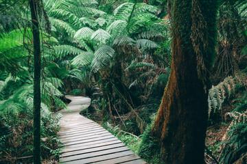 Fototapeta Winding boardwalk in Australian Rainforest obraz