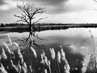 Fototapeta Tree obraz