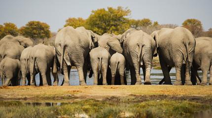 Elefantenherde in der Savanne
