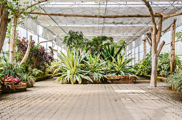 Interior of greenhouse garden with a variety of plants and flowers
