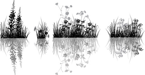 black and grey flowers in grass with reflection
