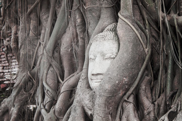 Head of  Buddha in tree roots