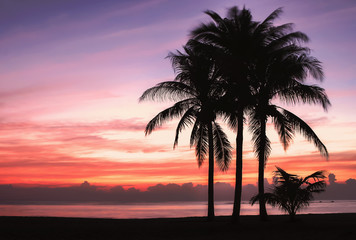 palm trees sunset beach