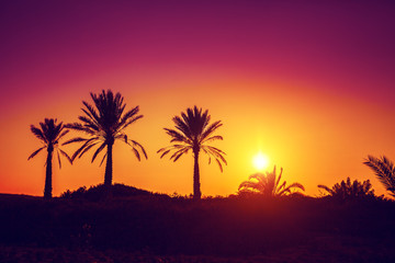 Wall Murals Orange Glow Silhouette of palm trees at sunset