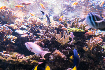 coral reef fish in the water
