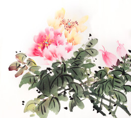 peony flower,Traditional chinese ink and wash painting
