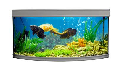 Beautiful semi-circular aquarium with tropical fish on a white background