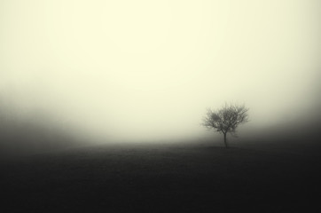minimal dark landscape tree in fog