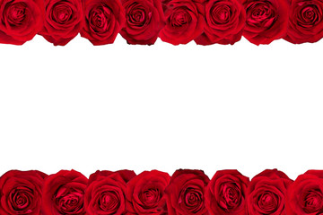 Red roses arranged in lines. White background.