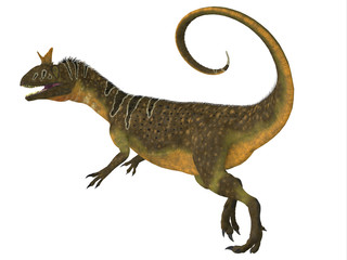 Cryolophosaurus Tail -Cryolophosaurus was a large theropod carnivorous dinosaur that lived in Antarctica during the Jurassic Period.