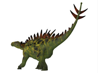 Huayangosaurus Dinosaur Tail - Huayangosaurus was an armored herbivorous dinosaur that lived in the Jurassic Period of China.
