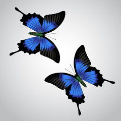 realistic vector butterfly  on grey background