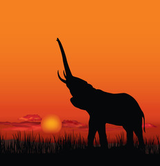 African landscape with animal elefant silhouette. Savanna sunset background