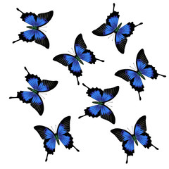 realistic vector butterfly  on white background