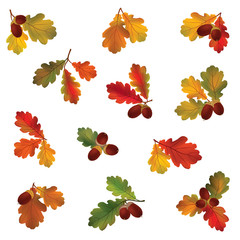 Autumn icon set. Fall oak leaves and berries. Nature symbol vector collection