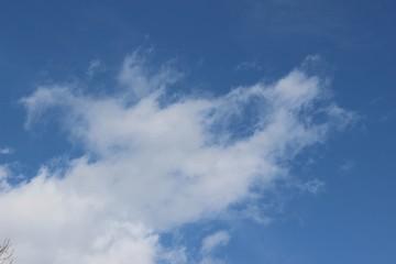 冬の空/動物の顔に見える白い雲