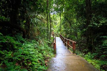Rain forest and bridge