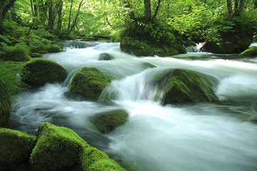 Foto op Canvas water spring in forest