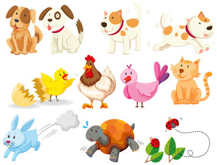 Different kind of domestic animals