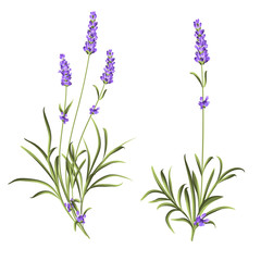 Set of lavender flowers