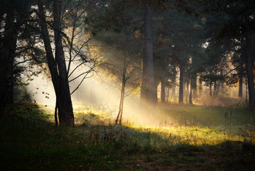 Keuken foto achterwand Bos in mist sunbeams in fog in the forest