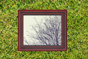 Wooden frame with view of dry branch of af tree, on green grass