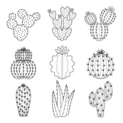 Vector icon set of contour cactus and succulent