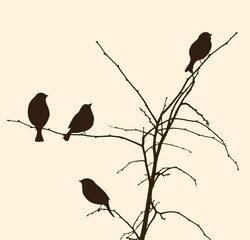 birds on the tree branches
