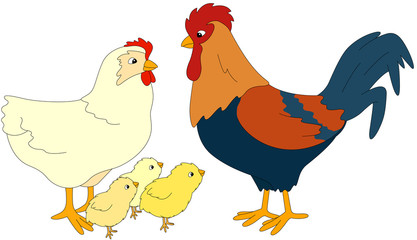 Set of cock, hen and chicks. Vector illustration