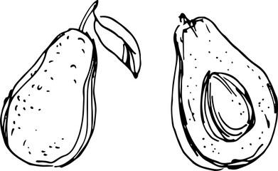 Avocado. Vector Illustration