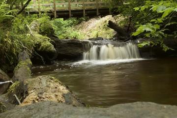 Лесной ручей с мостом