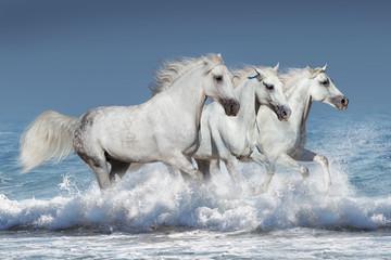 Horse herd run gallop in waves in the ocean