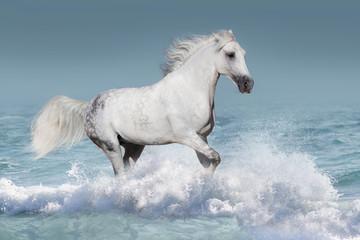 White arabian horse run gallop in waves in the ocean