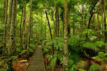 Botanic Garden, Cairns, Queensland, Australia