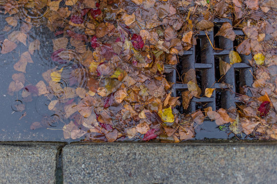 Leaves clogging a drain
