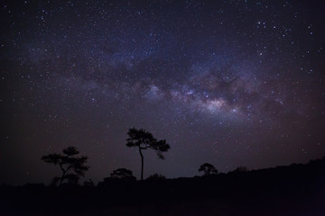 Silhouette of pine tree and milky way.Long exposure photograph.W