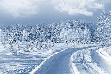 Photos of the winter woods. Winter landscape.