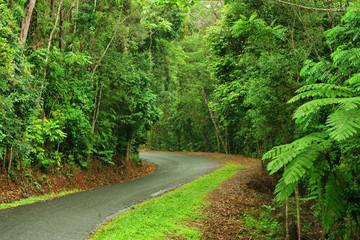 Travelling the rainforest near Kuranda, Queensland, Australia