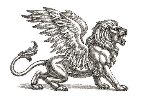 Крылатый лев, рисунок тушью.