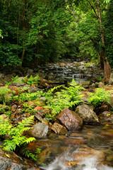 rainforest creek, Daintree area, North Queensland, Australia